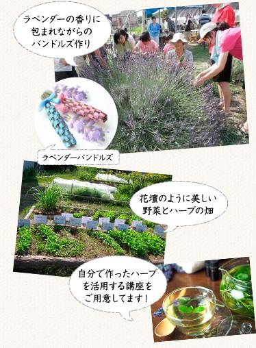 名古屋近郊でハーブと有機野菜の菜園づくりをする「ポタジェコース」講座イメージ