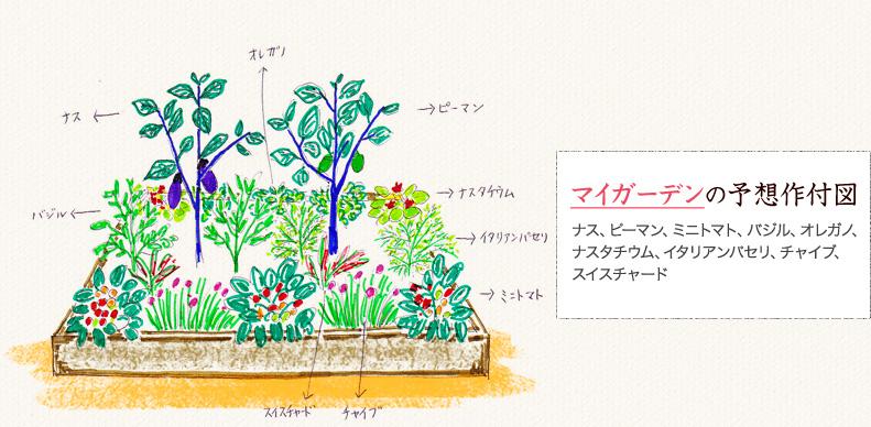 名古屋近郊でハーブと有機野菜の菜園づくりをする「ポタジェコース」マイガーデンの予想作付図