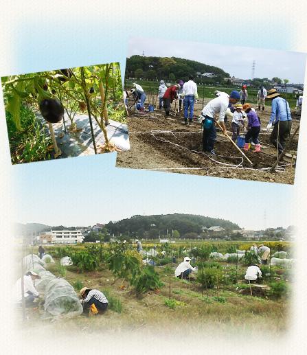 名古屋近郊の市民農園で有機野菜づくりー日進野菜塾イメージ