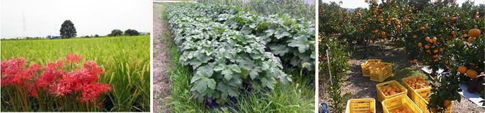 名古屋近郊で育てた有機野菜、果物、加工品の栽培圃場イメージ