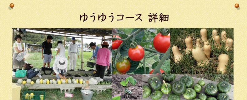 名古屋近郊で育てた有機野菜、米、果実、加工品を年間とおして購入できる「ゆうゆうコース」詳細
