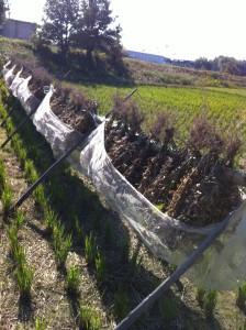 ■大豆乾燥