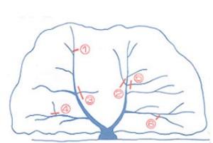 せん定の樹木図