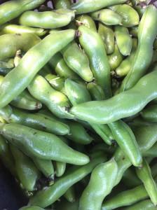 ■収穫そら豆