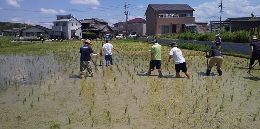 200621 田んぼ草取り ①